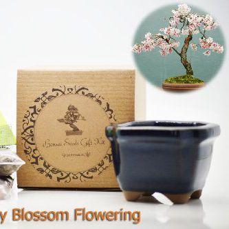 Amazon Is Selling A Grow Your Own Cherry Blossom Bonsai Tree Kit For 13 Cherry Blossom Bonsai Tree Bonsai Tree Bonsai