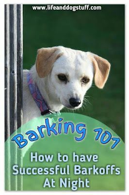 Barking 101 How To Have Successful Barkoffs At Night Funny Dog
