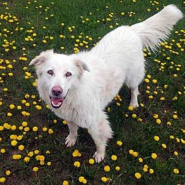 Adoptable Rescue Dog Calgary Alberta Canada Dog Adoption Cat