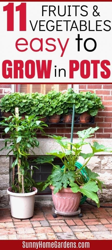 11 Easy Fruits And Vegetables To Grow In Pots In 2021 Patio Container Gardening Container Vegetables Growing Vegetables