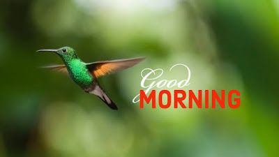 100 Good Morning Bird S Images And Quotes For Free Download Good Morning Images Good Morning News Online