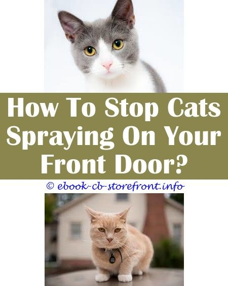 how fix you prize rider your manful true cat is spraying