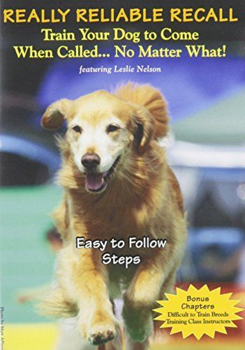 Secret Strategies For Training Your Dog To Come When Called
