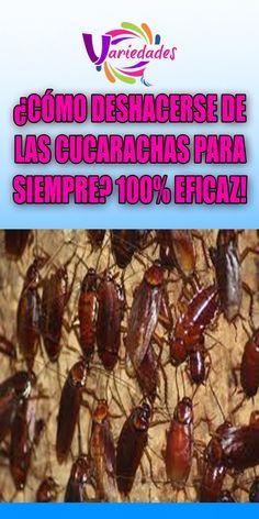 Cómo Deshacerse De Las Cucarachas Para Siempre 100 Eficaz Cucaracha Deshacer Mundo Rose Recipes Childproofing Cleaning Hacks