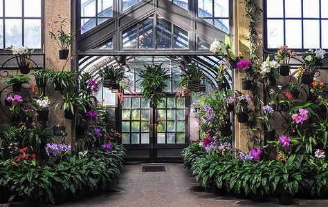 The Orchid Room at Longwood Gardens | December 1, 2013 | school40 | Flickr