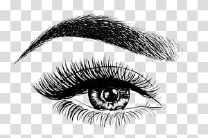 Dallas Brow Couture Eyebrow Drawing Microblading Permanent Makeup Pencil Transparent Background Png Clipart Eyebrow Design Permanent Makeup Eye Illustration
