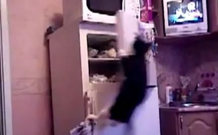 Cat jumps to Olympic heights! (video)