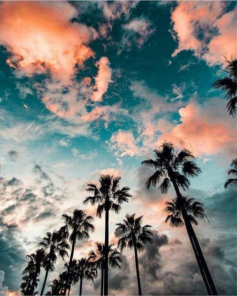 #aesthetic #clouds #skies #palmtrees