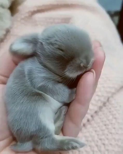 a sleeping baby bunny : aww