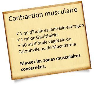 huile essentielle estragon contraction musculaire Huile essentielle estragon : Tension, anxiété, problème de digestion et les allergies !