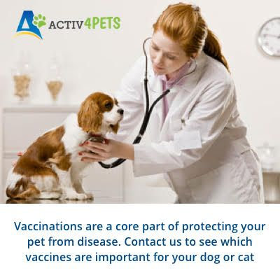 Is Your Dog Vaccinated Contact Our Veterinarians Online Here Https Www Activ4pets In Account Login Available For A Free Co Pet Parent Veterinarian Pet Care