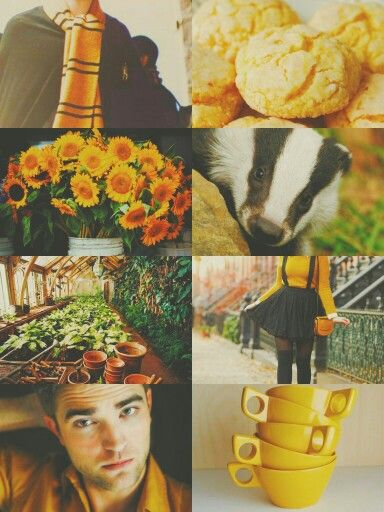591021d8c09f9a422370328b93ce546b  cedric diggory aesthetic aesthetic collage