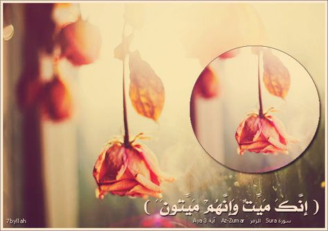 Pin By بسم الله الرحمن الرحيم On القران الكريم
