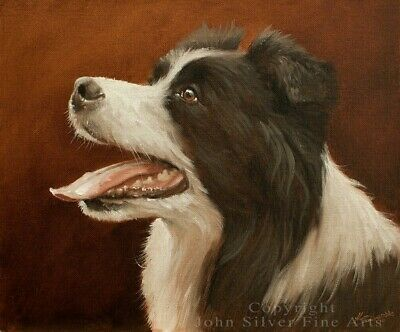 45 Border Collie For Sale Uk In 2020 Border Collies For Sale
