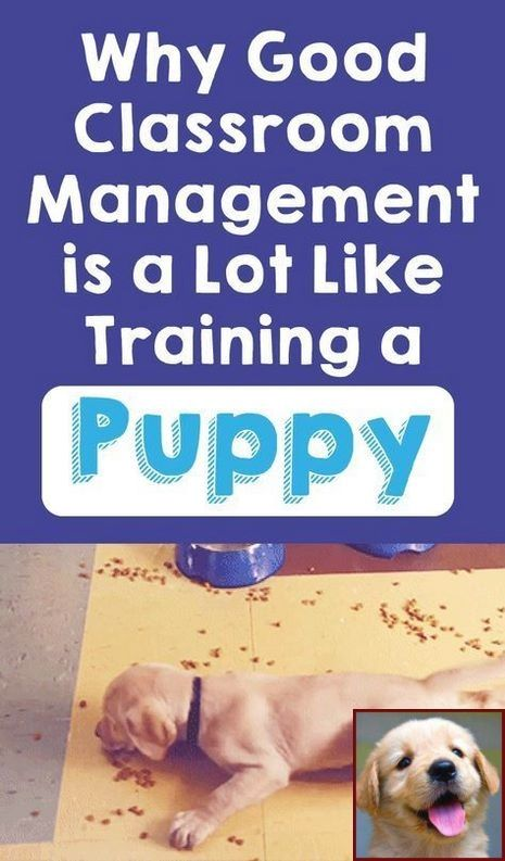 Humane Society House Training A Puppy And Dog Training Courses