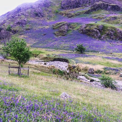 The secret valley in Rannerdale . Lake District Cumbria...