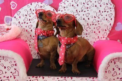 I Love My Wiener Party 2017 Edmonton Dachshund Social Club