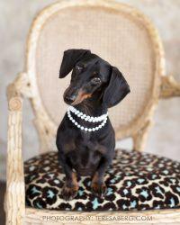 Princess Violet of Colleyville, TX