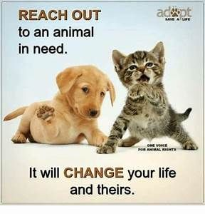 Animal Rights Memes Yahoo Image Search Results Rescue Dog Quotes Dog Quotes Funny Animal Adoption Quotes