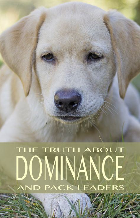 Dogs Are Not Trying To Dominate Us Use Force Free Positive