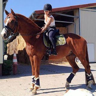 تفسير الاحلام مجانا स वप न म घ ड Horse Horses Horse Love Show Horses