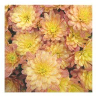 Chrysanthemum Plant Group Peach Perfect Poster Chrysanthemum Group Peach P Chrysanthemum Group Peach Pe Chrysanthemum Plant Chrysanthemum Plants