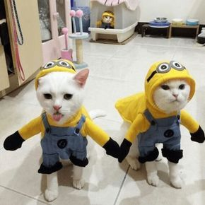 Amazing Minions Cat And Dogs Costume Cute Animals Pet Costumes
