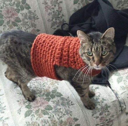 Crochet a Sweater for Your Cat – free patterns | Grandmother's ... | 433x439