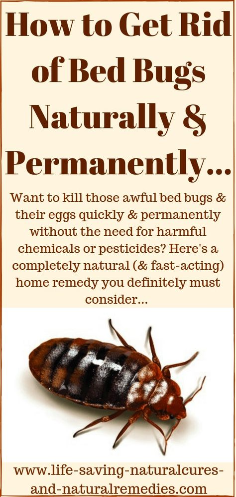 Permanently Naturally Kill Bugs How Get Rid Bed To Ofhow