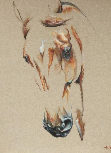 Die 81 besten Bilder zu Horses | Pferdebilder, Pferd, Schöne