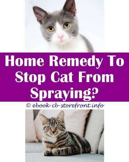 3 Resourceful Hacks Cat Spraying Suddenly And Losing Weight Cat Bully Estional Holistic Spray Spray To Keep Cat Off Of Furniture Litter Box For Cat Wh Admirable
