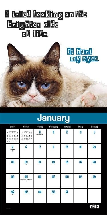 Grumpy Cat Calendar 2019 January You had me at NO. Grumpy Cat Wall Calendar #dateworksbytrends