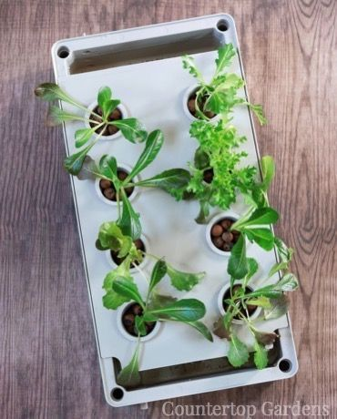 Countertop Gardens Grow Hydroponically Indoors Perfect For