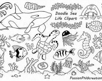Big Set Of Doodle Marine Life Clipart Sea Life Clip Art Etsy Under The Sea Drawings Marine Life Whiteboard Art