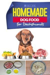 Recipe Homemade Dog Food For Dachshunds In 2021 Homemade Dog Food Dog Food Recipes Raw Dog Food Recipes