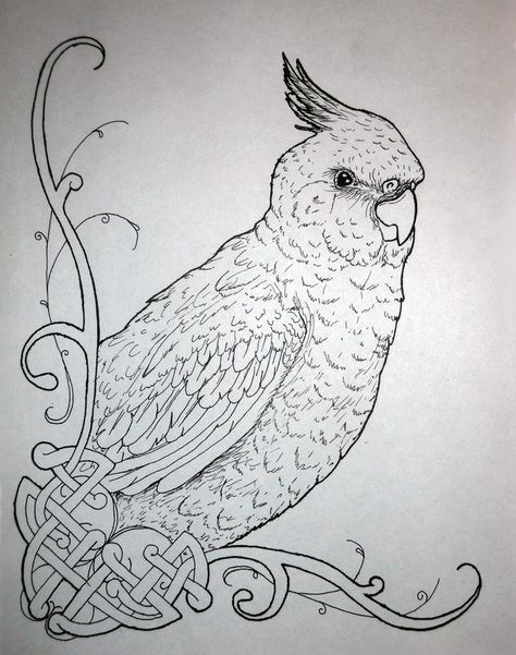 Coloring Pages Of Cockatiels Cockatiel In Ink By Never Mor On Deviantart Dibujos Dibujos Para Colorear Adultos Y Dibujos Para Pintar