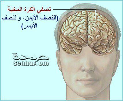 Pin By Hala Mer On Langue Medical Anatomy