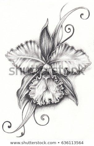 Pin By Deranae On Tattoos Pencil Drawings Orchid Drawing Flower Tattoo Drawings
