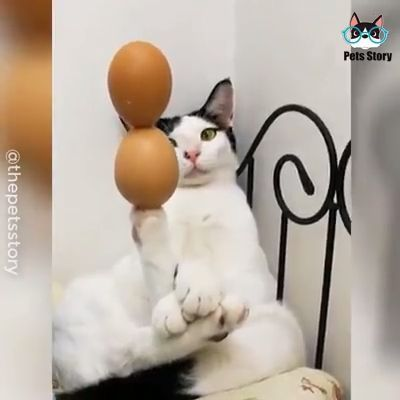 Funniest Cat Memes For 2020 Kittens Meow Kitten Kitty Cute Love Pet Catlife Funny Animal Videos Cute Baby Animals Cat Memes