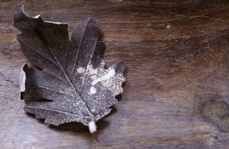 Leaf brooch printed with photograph 'Kissing couple'