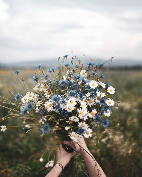 Blue and white floral bouquet photo by Dominika Brudny at Do.- Blue and white floral bouquet photo by Dominika Brudny at Dominika Brudny on Ins Blue and white floral bouquet photo by Dominika Brudny at Dominika Brudny on Ins… – -