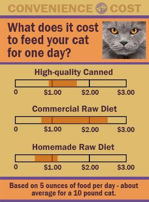 Nutrition For An Aging Cat Ideas Dry Cat Food Healthy Cat Food Animal Nutrition