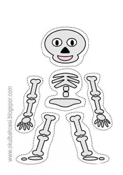 Iskelet Kaliplari Iskelet Insan Vucudu Boyama Sayfalari