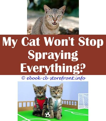 Pin En Cat Spray Repellant