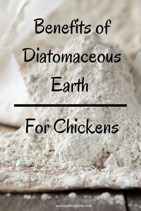 Diatomaceous earth benefits and uses for chickens. It is a great natural product you need on your homestead. Easy Chicken Coop, Chicken Garden, Backyard Chicken Coops, Chicken Coop Plans, Chicken Feed, City Chicken, Chicken Treats, Chicken Tractors, Urban Chickens