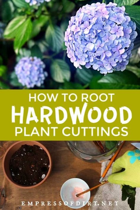 How to take cuttings from 40 popular shrubs and vines to root and grow new plants.