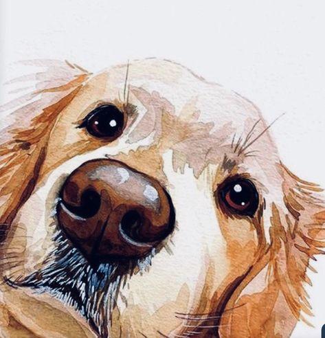 Dogs Art Jack Russel - - Dogs Paintings Paws - Dogs Cutest Pomeranians - Dogs Cutest White - Little Dogs Golden Animal Paintings, Animal Drawings, Art Drawings, Watercolor Illustration, Watercolor Art, Art Aquarelle, Arte Sketchbook, Watercolor Animals, Dog Portraits