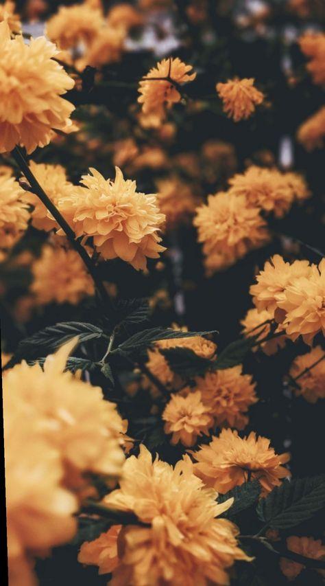 16+ Cute Tumblr Wallpapers Yellow