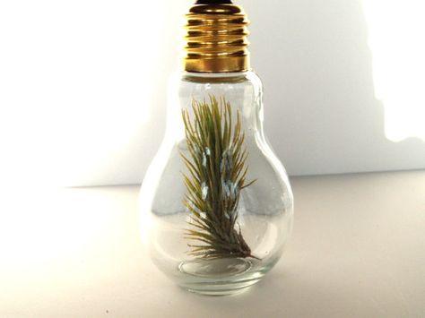 $14.95 - air plant in light bulb
