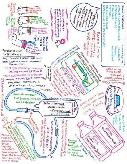 Graffiti Iv Fluids Vet Tech School Vet Medicine Veterinary Tech